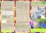New forest wildlife park leaflet