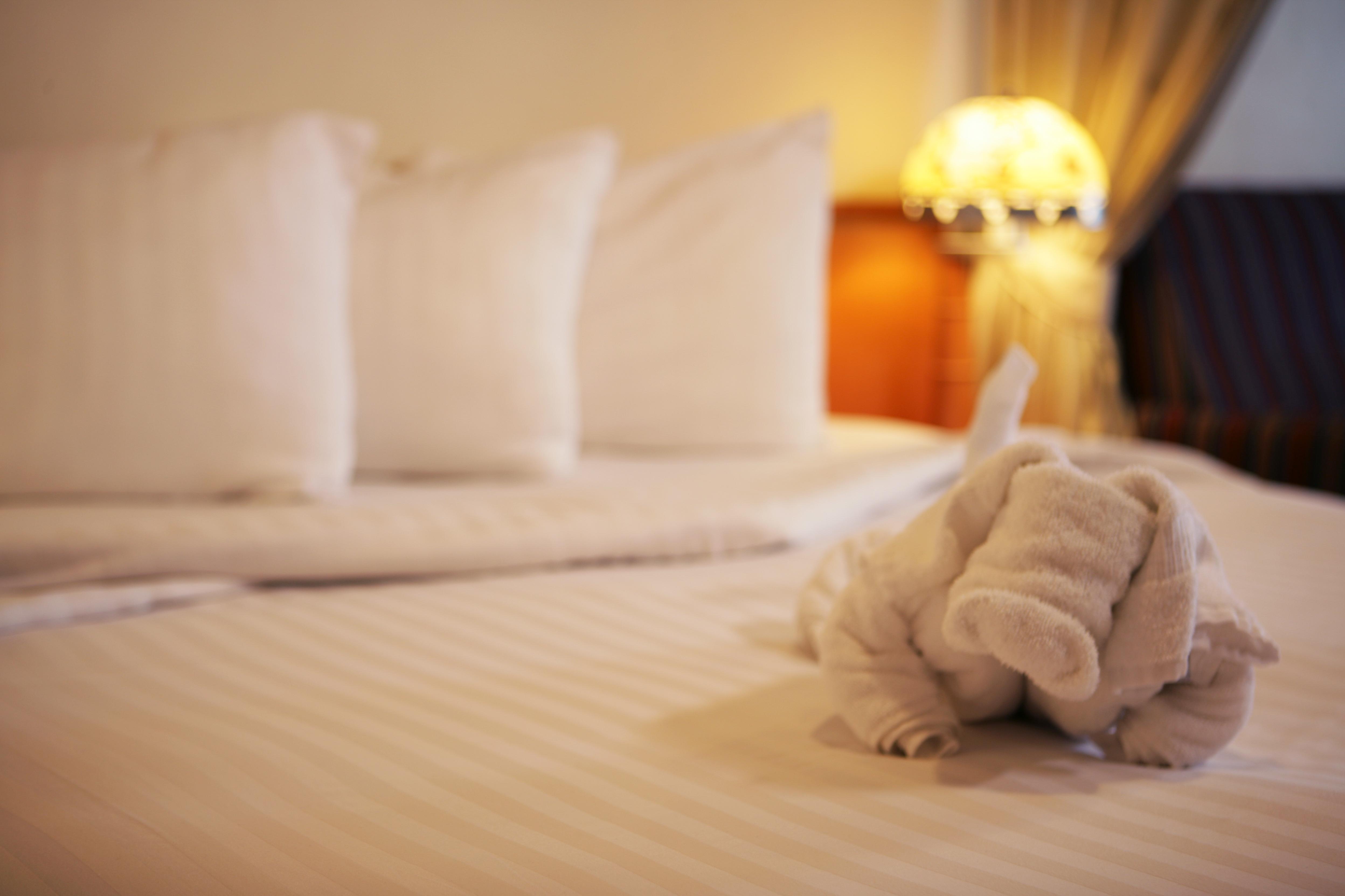 Disney Cruise Line Accommodation Towel Animal in Stateroom.jpg