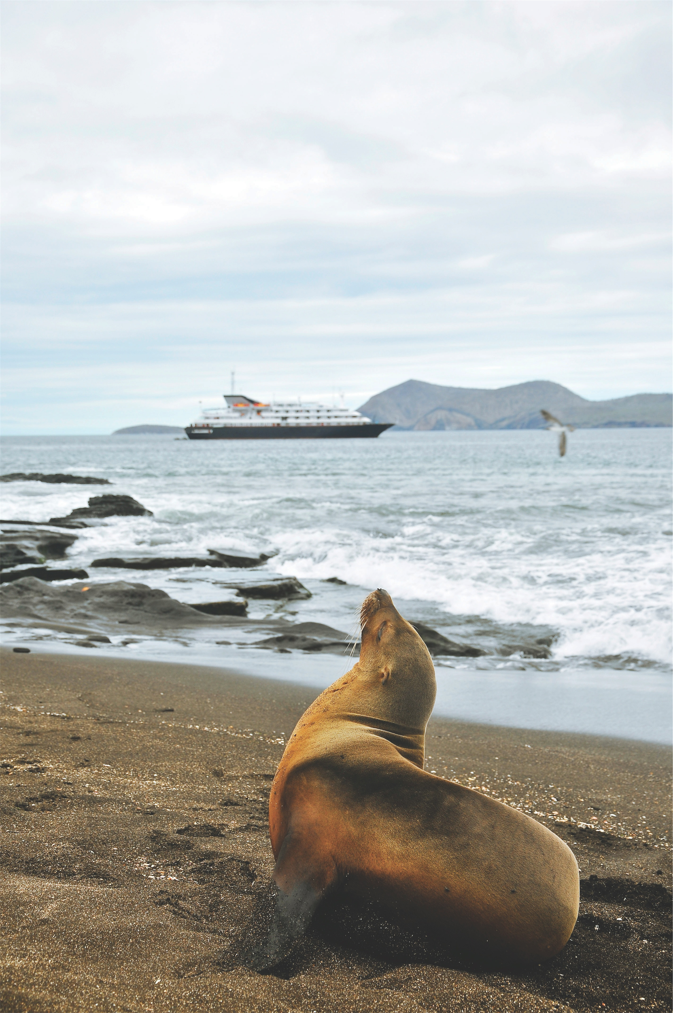 Silversea Cruises Silver Galapagos Exterior Exterior with Sea Lion in Foreground 1.jpg