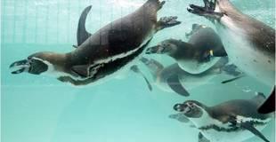Penguin Feeding Paultons.jpg