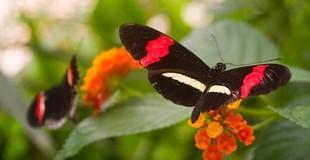 postman-butterfly.jpeg