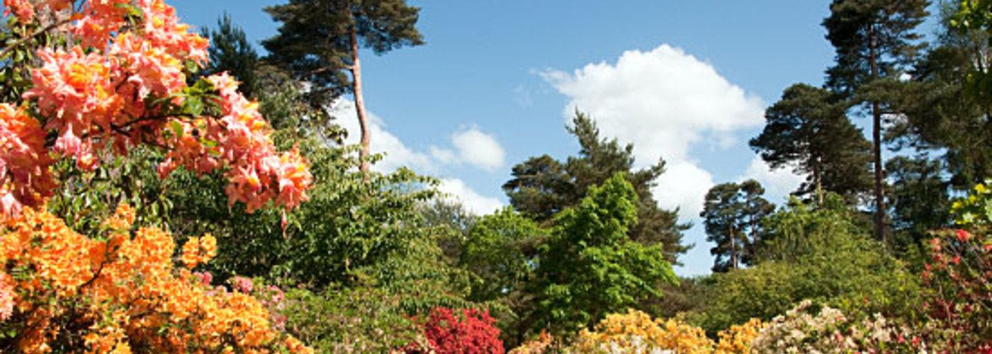 Sir Harold hillier gardens cover pic.jpg