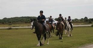Arniss Equestrian 1.JPG